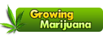 Growing Marijuana