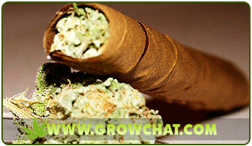 Marijuana Blunts For A Convenient Way Of Storing And Smoking Cannabis