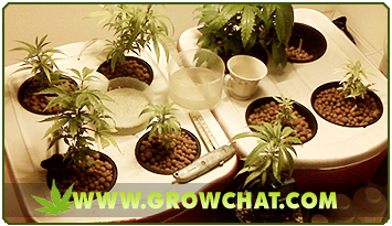 Using marijuana pots and containers for cannabis when growing indoors