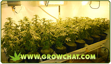 Effective Ways to Eliminate Odour from the Growroom of Weed Plants
