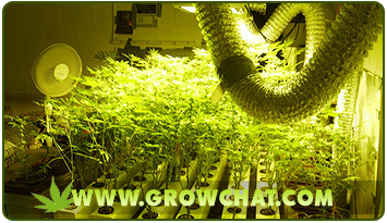 Growing Marijuana Plants Using the best Indoor Set-up