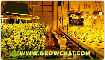 Kinds of Indoor Growing Systems for Marijuana Plants