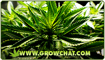 Growing Marijuana Books : High Quality Guides and Tips for Growing Marijuana