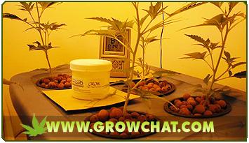 Indoor Marijuana  Growing with Bubbleponics System