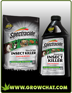 Get Rid of Marijuana Pests: Use Weed Pest Control Products