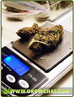 Best Marijuana Scales For Accurate Weighing Of Cannabis Buds