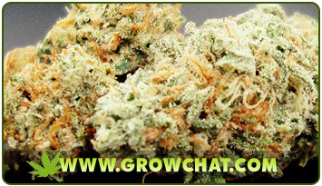 Several Reasons Why You Should Go Organic in Marijuana Farming