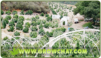 The Advantage and disadvantage of Growing Marijuana Outdoors