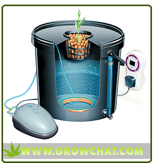 Understanding the use of Bubbleponics for Indoor Marijuana Growing