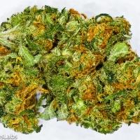 TropiCanna Marijuana Strain