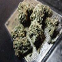 Chronic Marijuana Strain