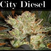 City Diesel Marijuana Strain
