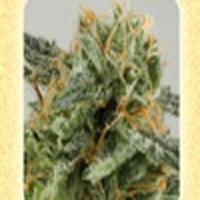 Crystal Ryder Marijuana Strain
