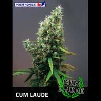 Cum Laude Marijuana Strain