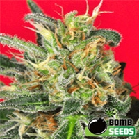 Cluster Marijuana Strain