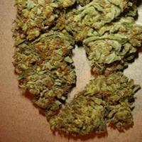 Aiea Marijuana Strain