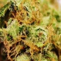 Silverdream Marijuana Strain