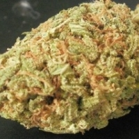 Strawberry Chem Kush Marijuana Strain
