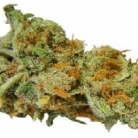 Super Lemon Haze Marijuana Strain
