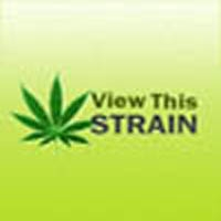 Blue Frost Marijuana Strain