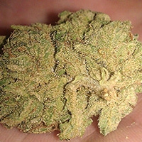 Blue Diamond Marijuana Strain