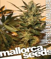 Estrella de Mallorca   Marijuana Strain