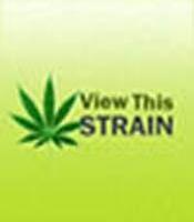 Green House Skunk Marijuana Strain