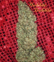 Hubble Bubble  Marijuana Strain