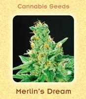 Merlins Dream Marijuana Strain