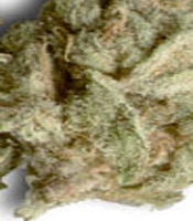 Merville Blueberry  Marijuana Strain